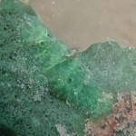 2011/1/2撮影 パロンシュリンプ 緑色バージョン