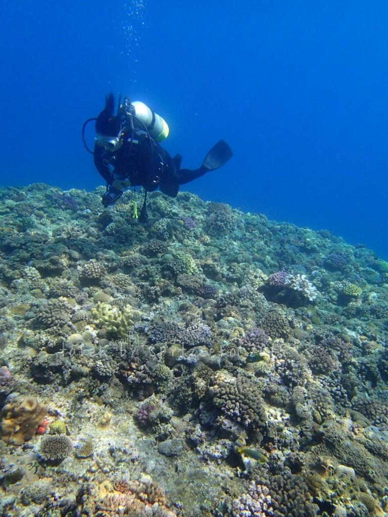 サンゴとリピーターさん