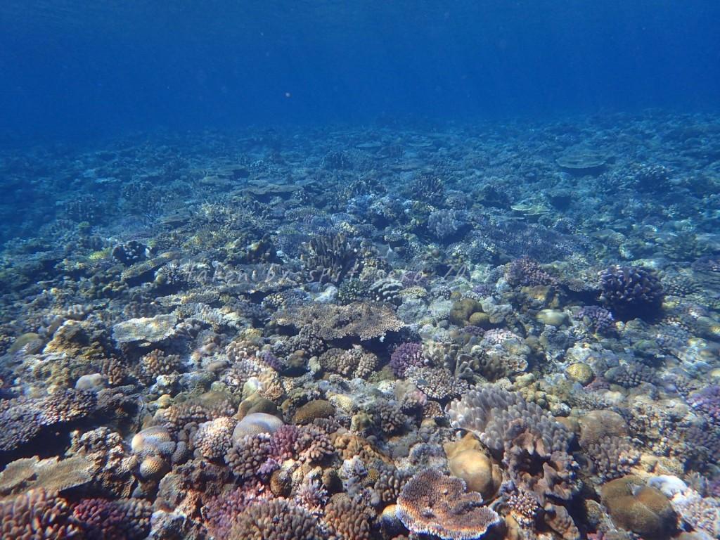 水納島のサンゴも美しい~