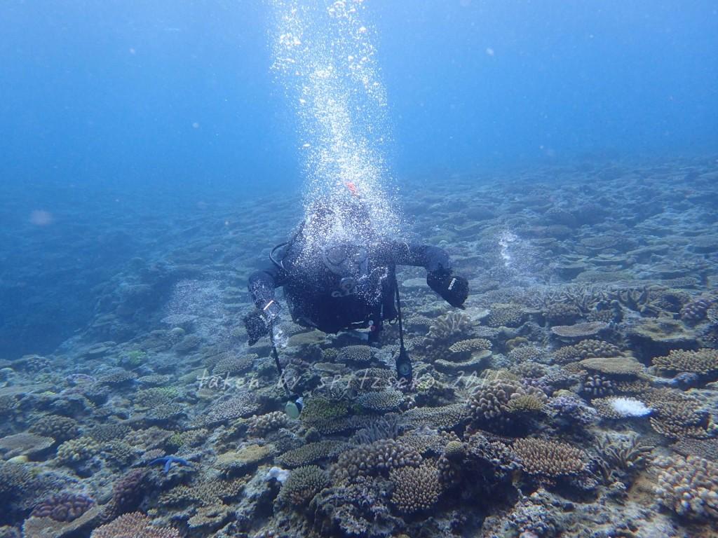 水中カメハメ波練習中の講習生