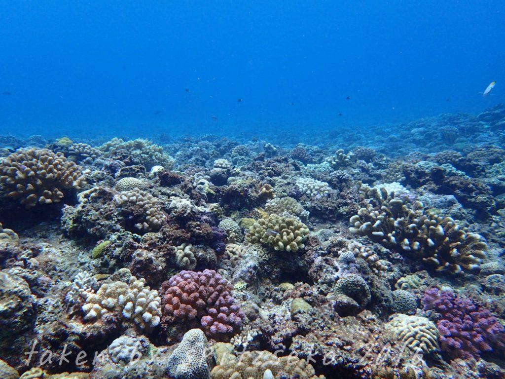 水深6Mぐらいのサンゴ