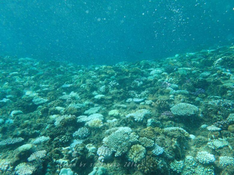 真栄田岬の北側の浅瀬の白化は深刻な状況です