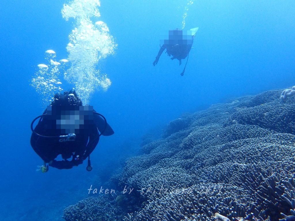 ユビエダハマサンゴが美しいです