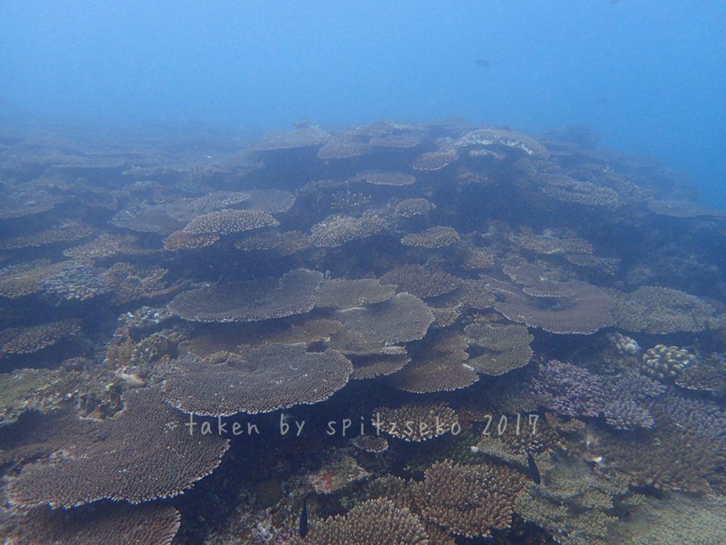 5M以深のサンゴはきれいでした