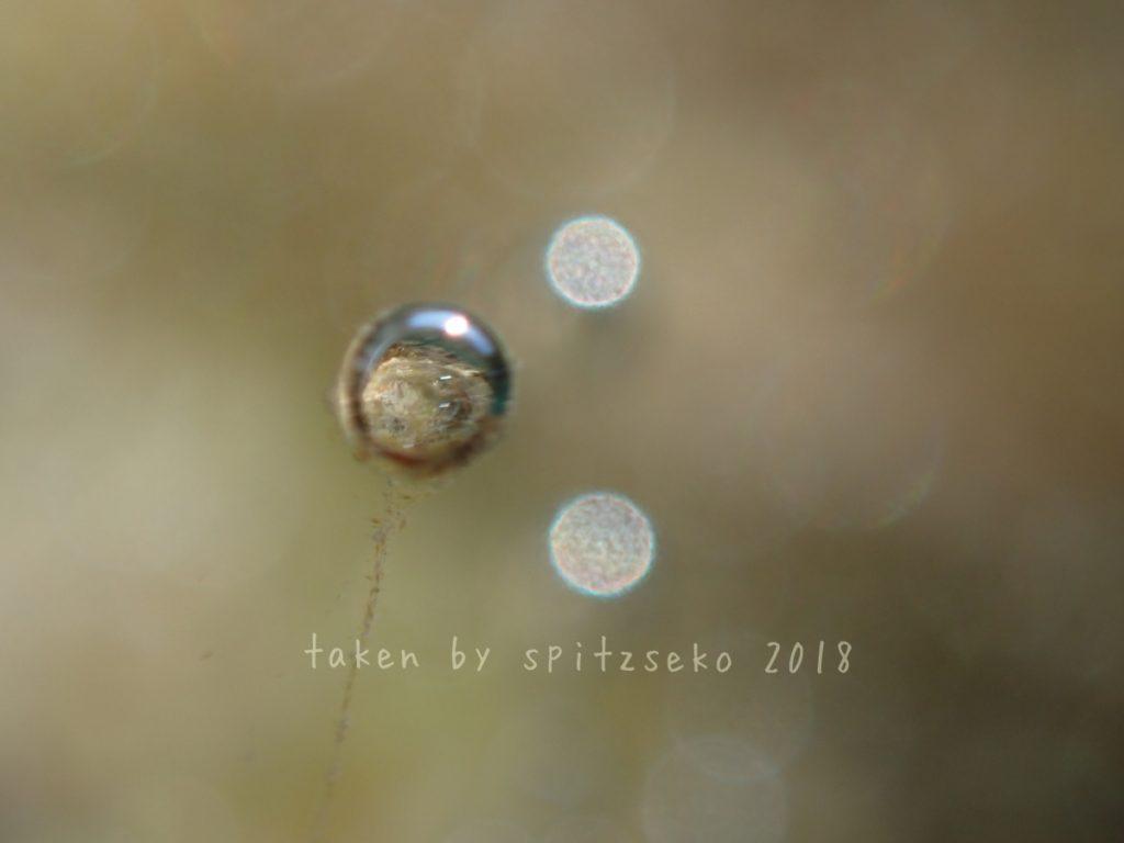 泡で遊ぼう、泡メル